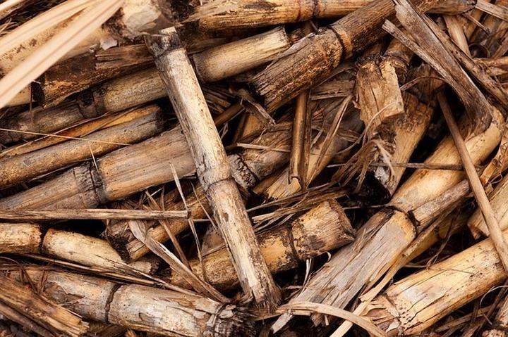 bagassa z trzciny cukrowej